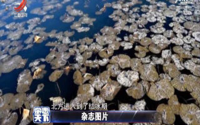 辽宁:用冰霜尘封美丽 静待来年春光