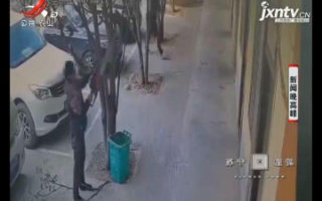 安徽亳州:酒后无故砍树 一男子被拘十五天
