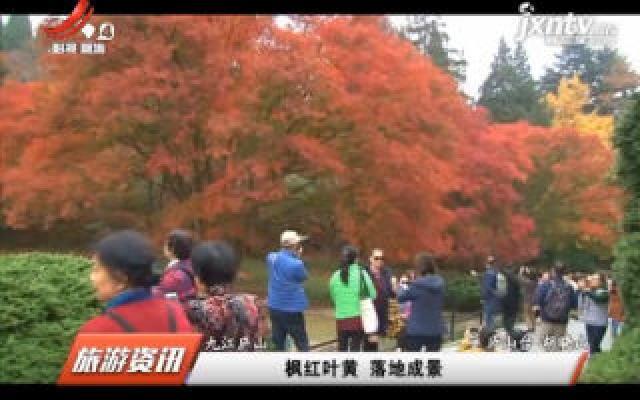九江庐山:枫红叶黄 落地成景