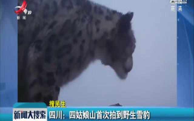 四川:四姑娘山首次拍到野生雪豹