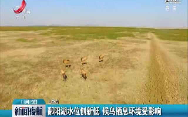 鄱阳湖水位创新低 候鸟栖息环境受影响