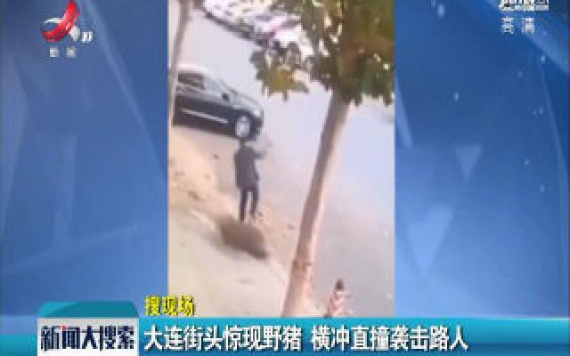 大连街头惊现野猪 横冲直撞袭击路人