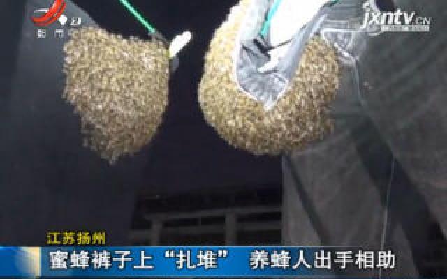 """江苏扬州:蜜蜂裤子上""""扎堆"""" 养蜂人出手相助"""