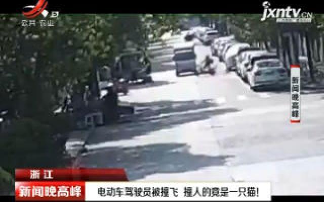 浙江:电动车驾驶员被撞飞 撞人的竟是一只猫!