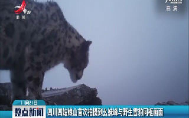 四川四姑娘山首次拍摄到幺妹峰与野生雪豹同框画面