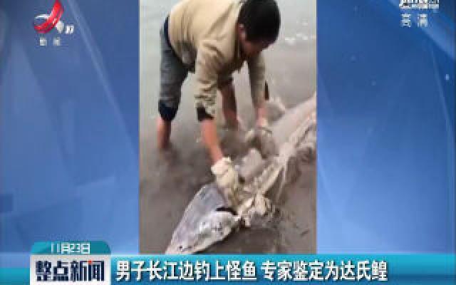 重庆:男子长江边钓上怪鱼 专家鉴定为达氏鳇