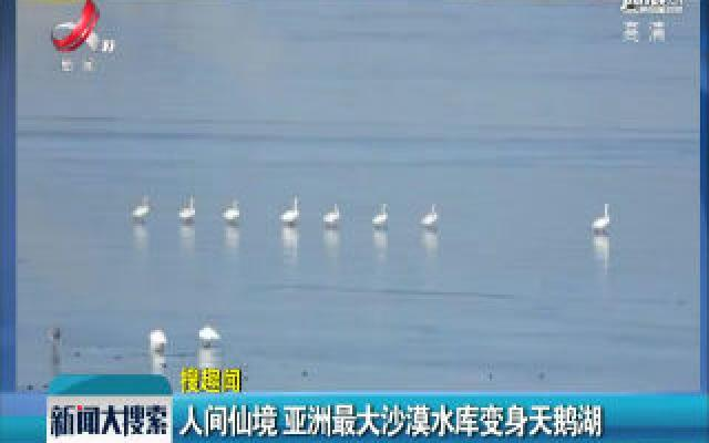 甘肃民勤:人间仙境 亚洲最大沙漠水库变身天鹅湖