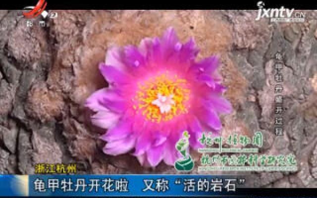 """浙江杭州:龟甲牡丹开花啦 又称""""活的岩石"""""""