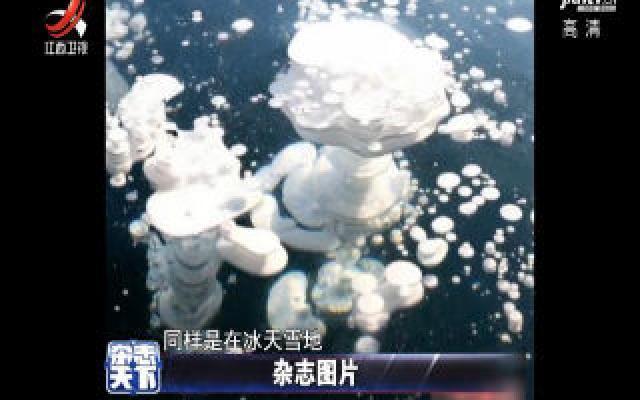 """黑龙江一湖泊现""""冰泡""""奇观 宛如巨型3D画"""