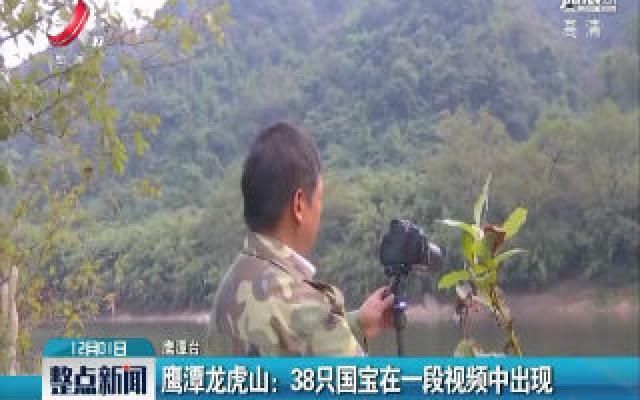 鹰潭龙虎山:38只国宝在一段视频中出现