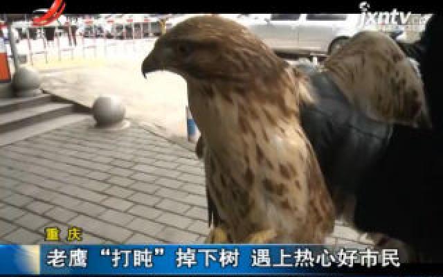 """重庆:老鹰""""打盹""""掉下树 遇上热心好市民"""