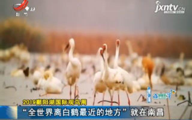 """2019鄱阳湖国际观鸟周:""""全世界离白鹤最近的地方""""就在南昌"""