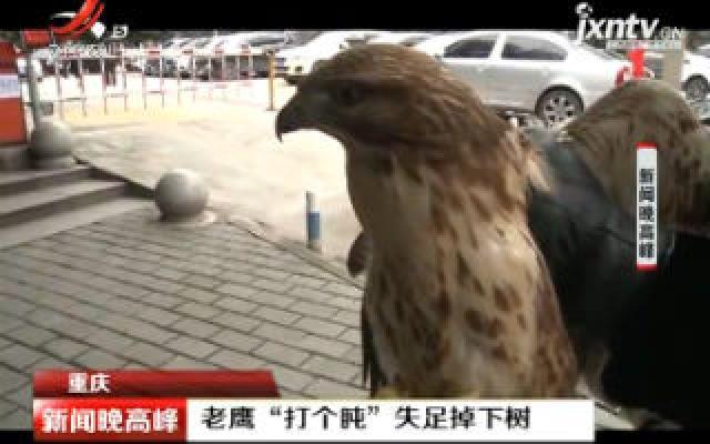 """重庆:老鹰""""打个盹"""" 失足掉下树"""