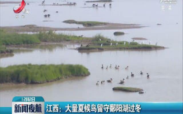 江西:大量夏候鸟留守鄱阳湖过冬