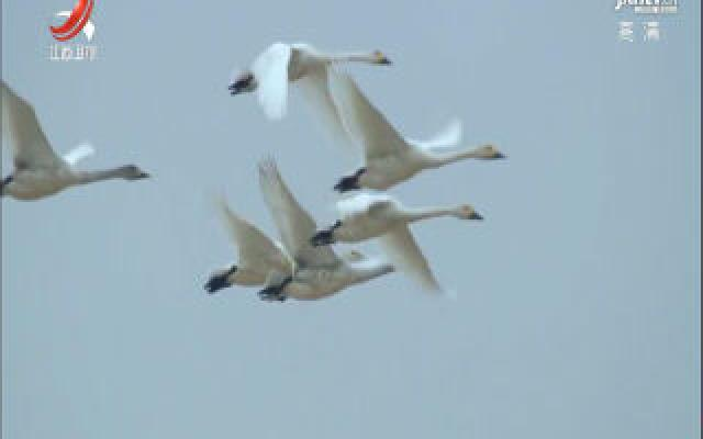 江西:多方联动监管 共护候鸟家园