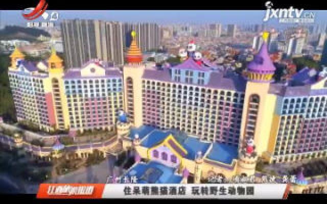 广州长隆:住呆萌熊猫酒店 玩转野生动物园