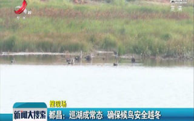 都昌:巡湖成常态 确保候鸟安全越冬