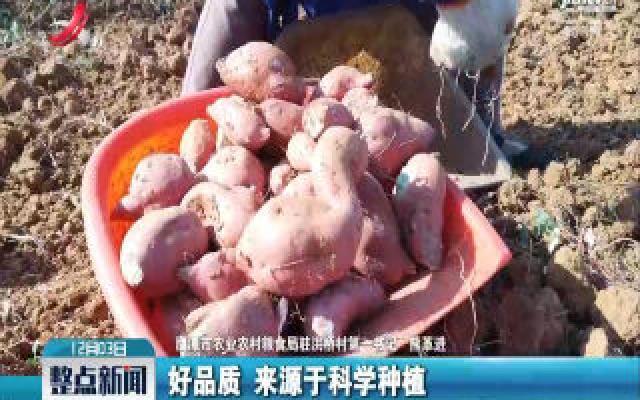 【第一书记晒丰收】余江区洪桥村:熊革进卖红薯 为贫困户增收