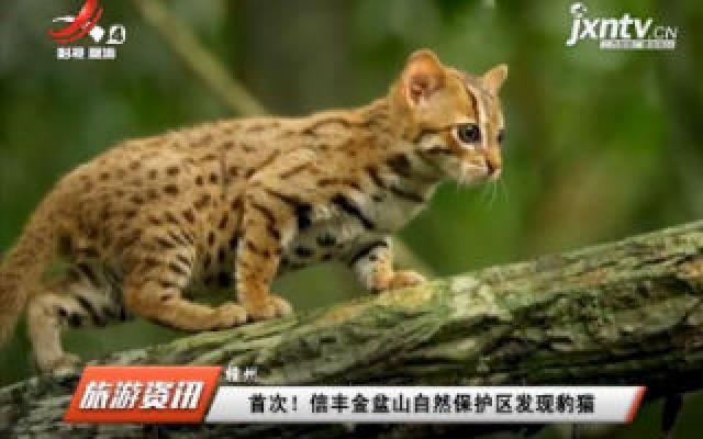 赣州:首次! 新丰金盆山自然保护区发现豹猫