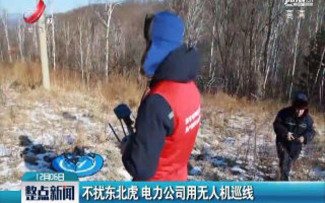 吉林:不扰东北虎 电力公司用无人机巡线