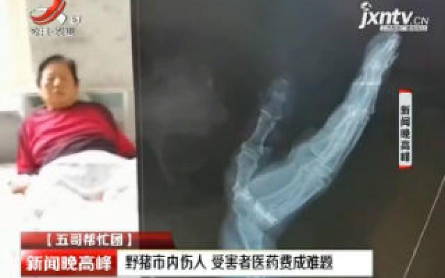 【五哥帮忙团】辽宁大连:野猪市区内伤人 受害者医药费成难题