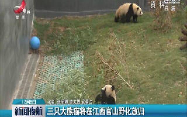 三只大熊猫将在江西官山野化放归
