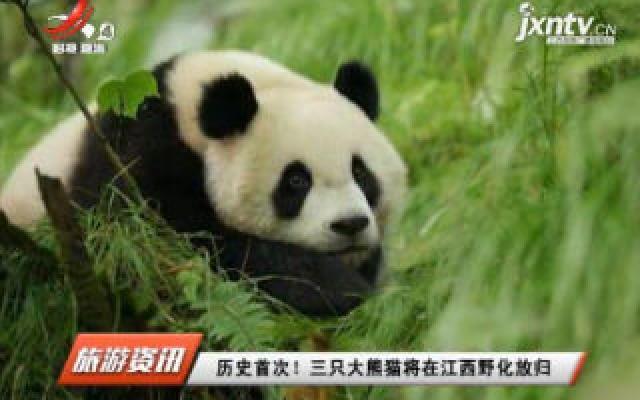 历史首次! 三只大熊猫将在江西野化放归