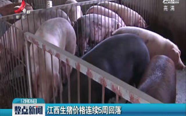华人娱乐app下载生猪价格连续5周回落