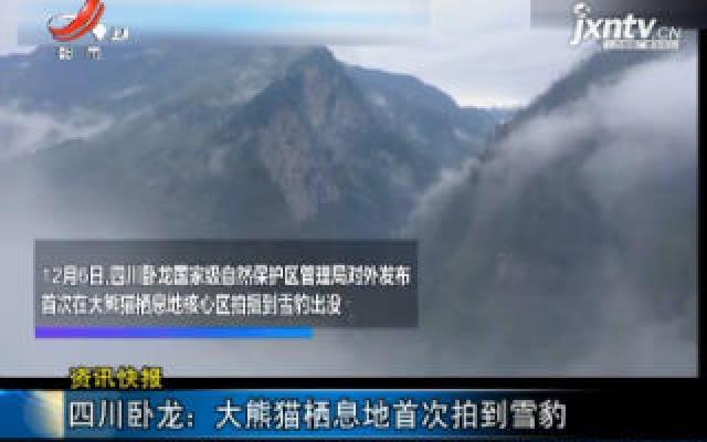 四川卧龙:大熊猫栖息地首次拍到雪豹