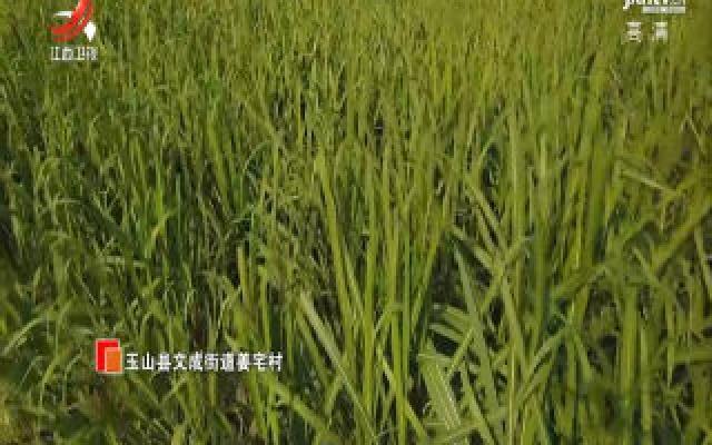 【第一书记晒丰收】玉山县姜宅村:一块红糖的甜蜜之旅