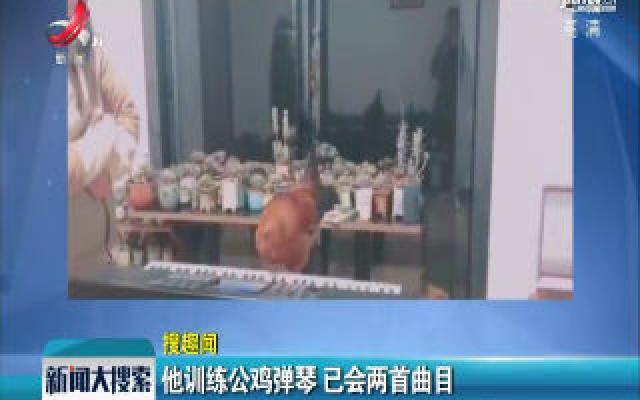 贵州贵阳:他训练公鸡弹琴 已会两首曲目
