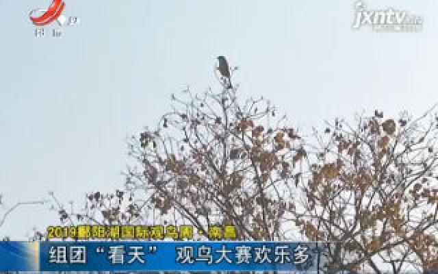"""2019鄱阳湖国际观鸟周·南昌:组团""""看天"""" 观鸟大赛欢乐多"""