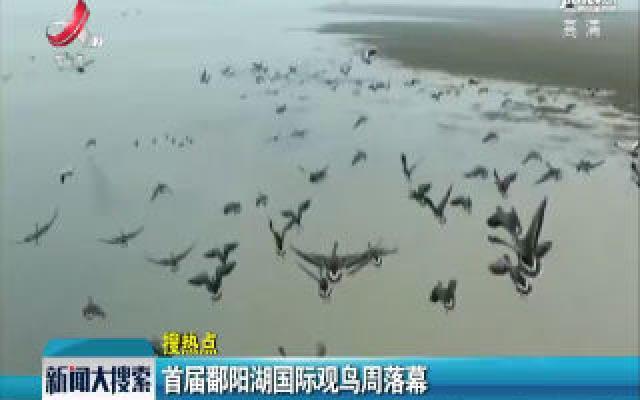 首届鄱阳湖国际观鸟周落幕