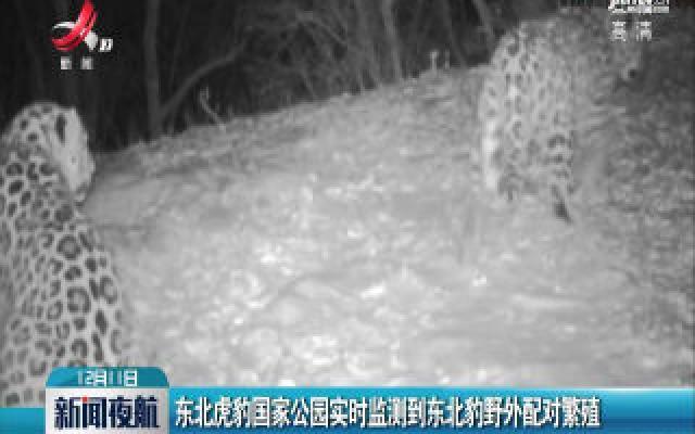 东北虎豹国家公园实时监测到东北豹野外配对繁殖