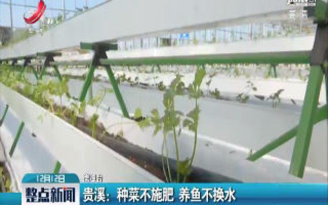 贵溪:种菜不施肥 养鱼不换水
