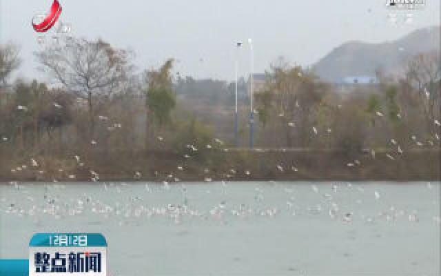 都昌矶山湖成越冬候鸟乐园