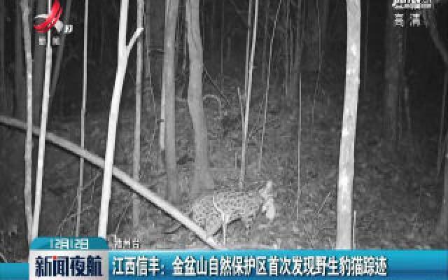 江西信丰:金盆山自然保护区首次发现野生豹猫踪迹