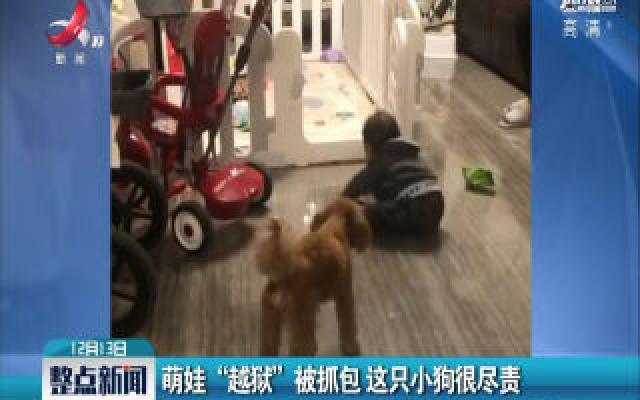 """江苏苏州:萌娃""""越狱""""被抓包 这只小狗很尽责"""