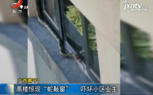 """广西南宁:高楼惊现""""蛇敲窗"""" 吓坏小区业主"""