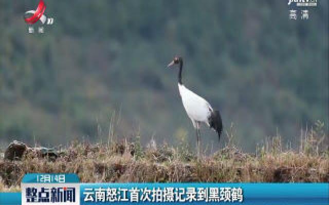 云南怒江首次拍摄记录到黑颈鹤