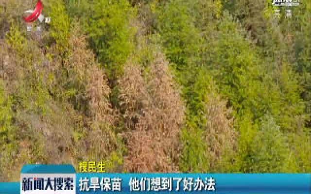 华人娱乐app下载:抗旱保苗 他们想到了好办法