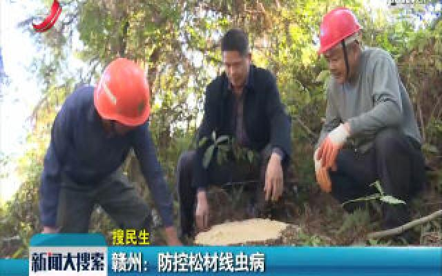 赣州:防控松材线虫病