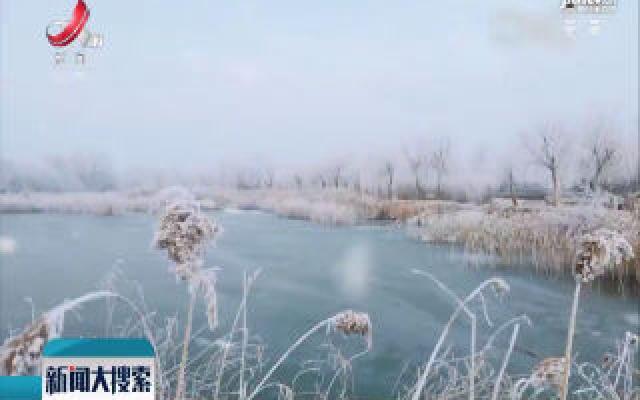 山东寿光:冬意浓 巨淀湖霜雪美景