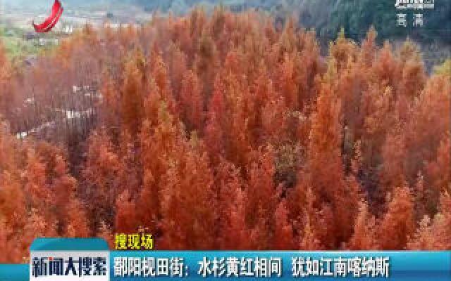 鄱阳枧田街:水杉黄红相见 犹如江南喀纳斯