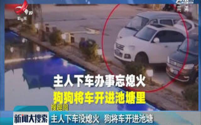浙江金华:主人下车没熄火 狗将车开进池塘