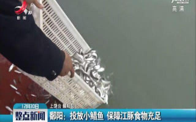 鄱阳:投放小鲳鱼 保障江豚食物充足