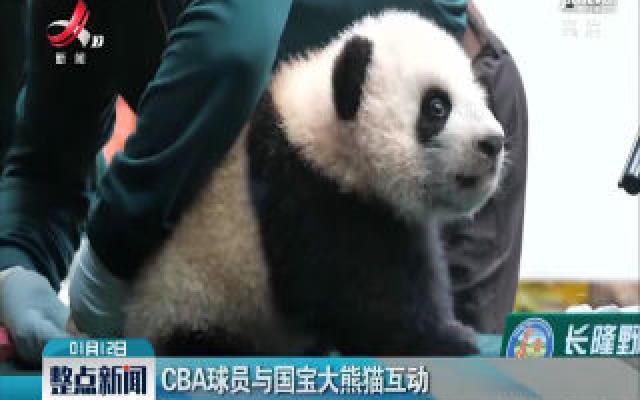 CBA球员与国宝大熊猫互动