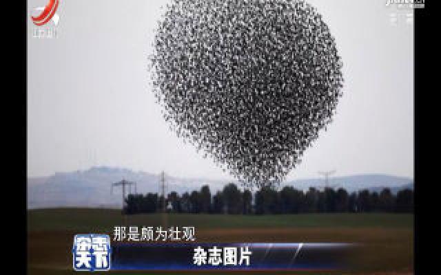 上万只椋鸟翱翔天空 搞怪造型千姿百态