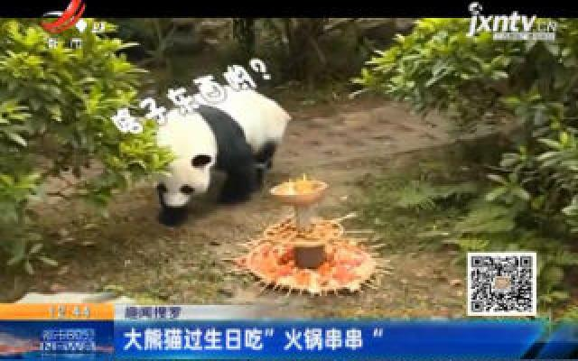 """【趣闻搜罗】大熊猫过生日吃""""火锅串串"""""""