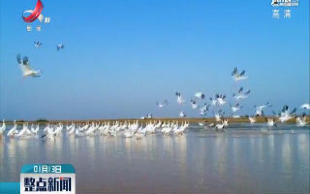 南昌五星白鹤保护小区:白鹤成幼比上升 出现双胞胎家庭